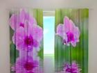 Затемняющая штора Three orchids 240x220 cm ED-100489