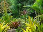 Флизелиновые фотообои Deep Jungle 360x270 cm ED-109408