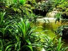 Флизелиновые фотообои Jungle waterfall lagoon 360x270 cm ED-109409
