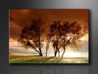 Настенная картина Trees 120x80 cm ED-114374