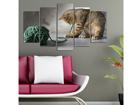 Картина из 5-частей Cats I, 100x60 cm ED-116690