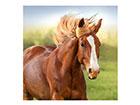 Картина Лошадь, 50x50 cm EV-120562