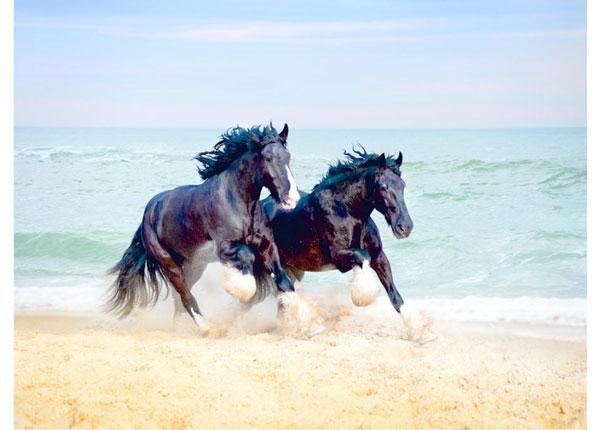 Флизелиновые фотообои Horses 360x270 cm ED-128172