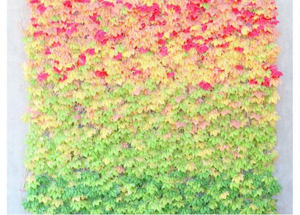 Флизелиновые фотообои Leaves 360x270 cm ED-128175