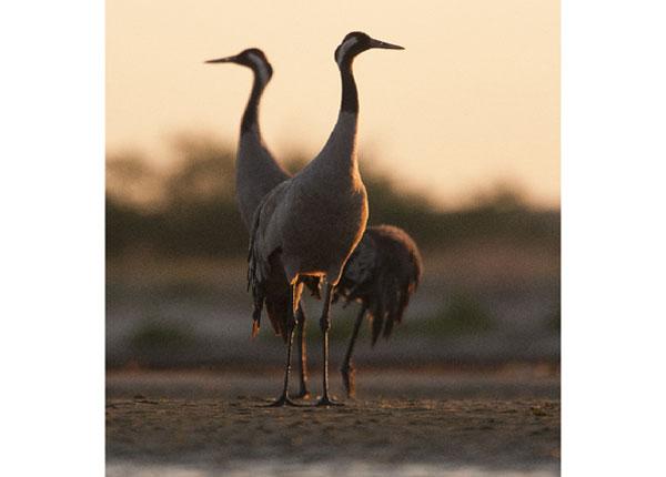 Флизелиновые фотообои The stork 288x190 см ED-133193