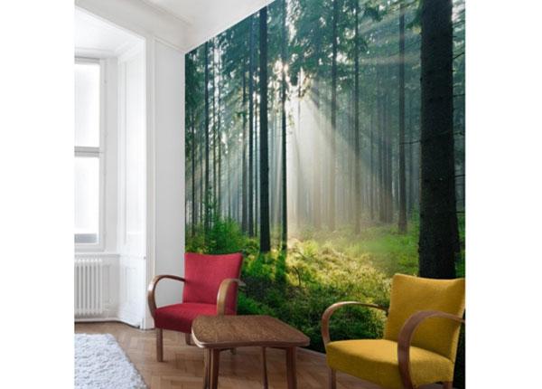Флизелиновые фотообои Enlightened Forest