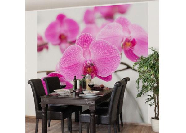 Флизелиновые фотообои Close up orchid