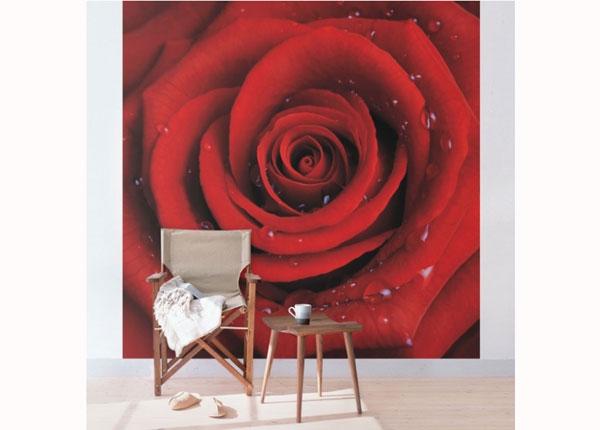 Флизелиновые фотообои Red rose with water drops