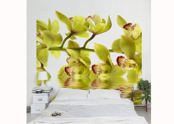Флизелиновые фотообои Splendid Orchid Waters