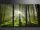 Картина из 3-частей Девственный лес ED-67575