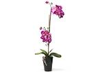 Искусственный цветок Розовая орхидея 72 cm EV-69043