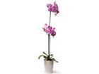 Искусственный цветок Светло-розовая орхидея 72 cm EV-69046