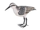 Металлическая птица Песчанка SH-79337