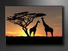 Настенная картина Африка 60x80 см ED-86109