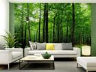 Фотообои Forest 360x254 см ED-88027