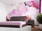 Фотообои Purple orchid 360x254 см ED-88058