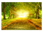 Фотообои Autumn avenue 400x280 см ED-88098