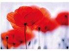 Фотообои Magical poppies 400x280 см ED-88123