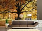 Флизелиновые фотообои Oak tree 360x270 см ED-90604