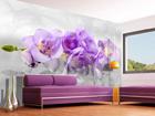Флизелиновые фотообои 3D orchid 360x270 см ED-90665