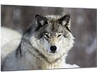 Стеклянная картина Wolf 80x120 cm QA-94174