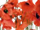 Флизелиновые фотообои Poppies 360x270 см ED-94803