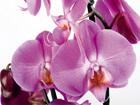 Флизелиновые фотообои Orchids 2 360x270 см ED-94808