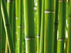 Флизелиновые фотообои Bamboo 360x270 см ED-94825