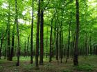 Флизелиновые фотообои Forest 360x270 см ED-94826