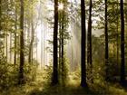 Флизелиновые фотообои Forest 3 360x270 см ED-94827
