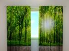 Затемняющая штора Forest at the doorstep 240x220 cm ED-97975