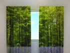 Затемняющая штора Forest 240x220 cm ED-97978