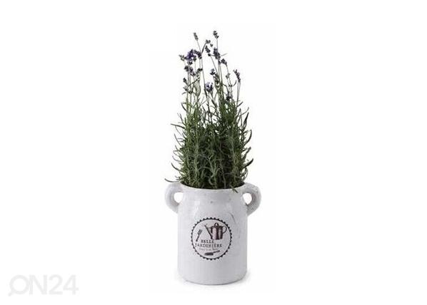 Горшок для трав Belle Jardiniere SG-131552