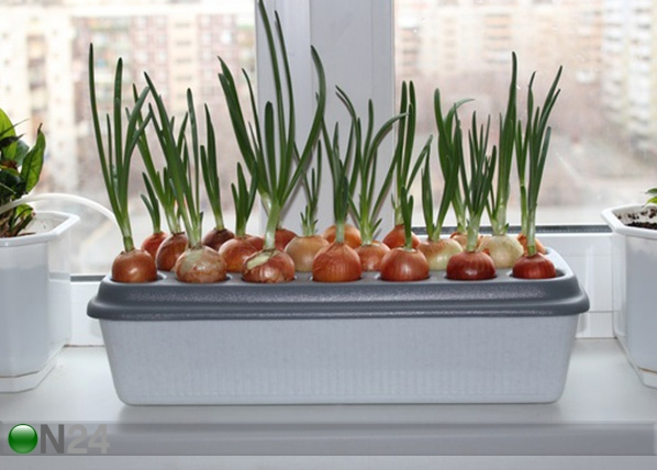 Горшок для выращивания лука PR-99847